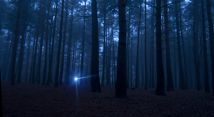 """Dark, spooky woods in the night with one solitary flashlight light. Purposefully dark for spooky, mysterious effect. Related:"""