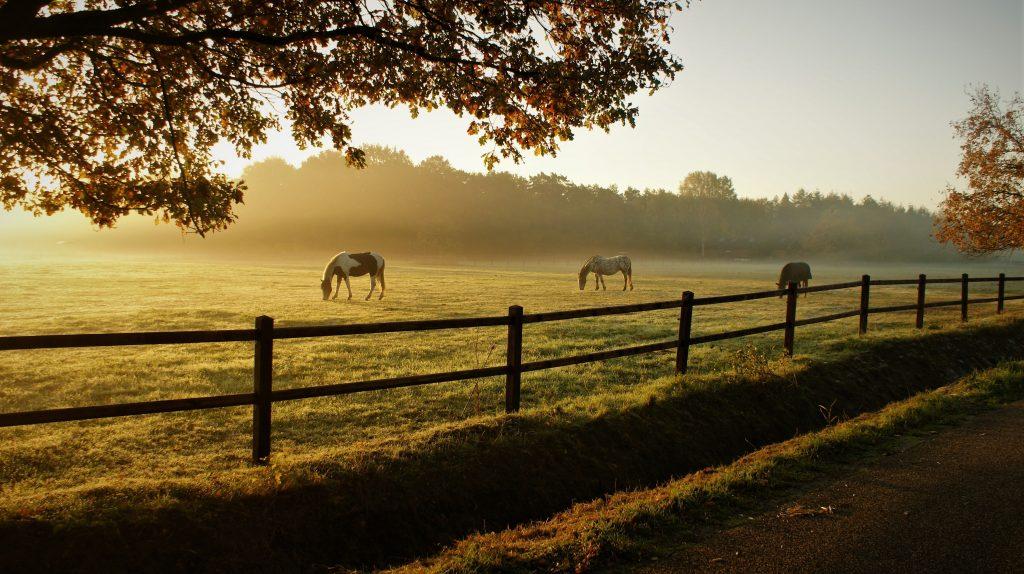 horses-5716127